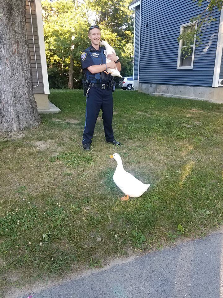 Officer Mandeville protecting and serving our local duck population