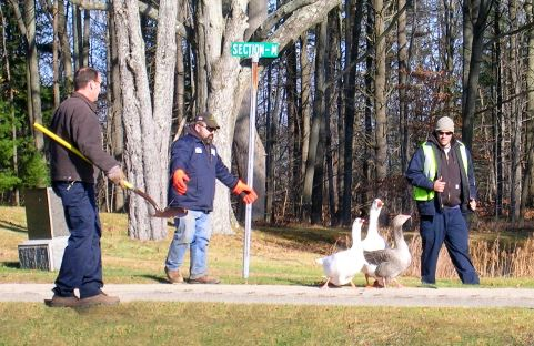 Public Services crew sending the geese to their winter home